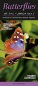 Butterflies of the Florida Keys