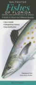 Saltwater Fishes of Florida-Central & Northern Gulf of Mexico  : A Guide to Inshore & Offshore Species