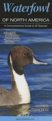 Waterfowl of North America