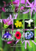 Somerset Wild Flowers