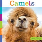 Seedlings Camels (Seedlings)