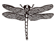 Mounted Rubber Stamp Dragonfly Small