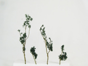 Architectural Model Foliage Tree Dark Green 24-Pack.