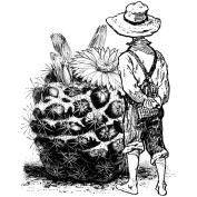 LaBlanche Silicone Stamp 10cm x 10cm -Befriending A Cactus