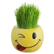 Funky Faces - Grass Heads RANDOM