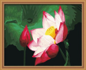 Diy oil painting, paint by number kit- Full bloom 16*50cm .