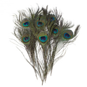 Umiwe(TM) Peacock Tail Feathers Natuatal Colour- packed of 10pcs With Umiwe Accessory