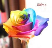 50pcs Rose Seeds Blue Red Purple Pink Black Petals Plants Home Garden Flower by TJSpecial