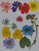 LoveDiyLife mixed Daisy Larkspur myosotis real pressed dried flowers
