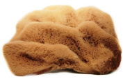 4-11cm , 'Silk Fina' Natural Sea Sponge for Facial Care, Washing, Cleaning, Showering, Baby Bath, Art and Craft Uses