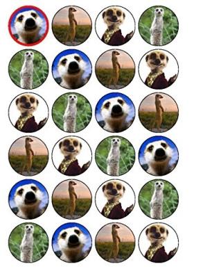 24 x meerkat Cupcake Toppers