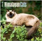 Himalayan Cats 2015 Wall