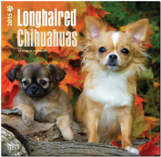 Chihuahuas, Longhaired 2015 Wall