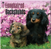 Dachshunds, Longhaired 2015 Wall
