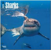 Sharks 2015 Wall