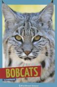 Bobcats (Wild Cats)