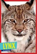 Lynx (Wild Cats)
