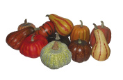 WEST COAST MINI NATURAL PUMPKIN DECORATION ASSORTED CHOICES MAY VARY
