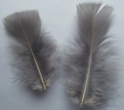 Grey Turkey Plumage Craft Feathers - Mini Pkg