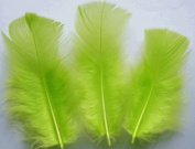 Lime Turkey Plumage Craft Feathers - Mini Pkg