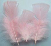 Light Pink Turkey Plumage Craft Feathers - Mini Pkg