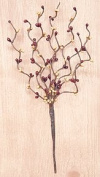 Burgundy & Old Gold Pip Berry Pick Branch Country Primitive Floral Décor
