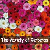 The Variety of Gerberas