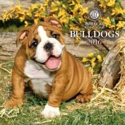 Bulldogs Calendar