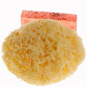 Natural Sea Sponge - Honeycomb - 13cm