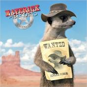 Maverick Meerkats 2016