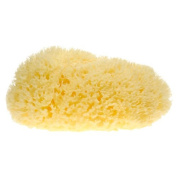 Natural Honeycomb Sea Sponge 15cm - 17cm long
