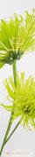 Botanika Essence Lotion - Maja, 250ml/8.45oz