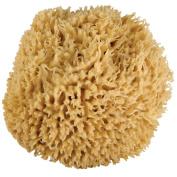 JUST WHOA. Ultra Soft & Really Really Big Sea Wool Bath Sponge