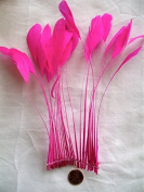 Stripped Coque Feathers, MANY colour OPTIONS, Pack of 25 , Millinery and Crafts - by Lamplight Feather, Inc. (HOT PINK