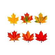 TREND ENTERPRISES INC. CLASSIC ACCENTS MAPLE LEAVES