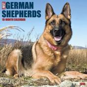 German Shepherds Calendar