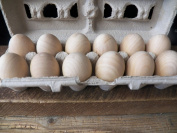 One Dozen (12) Hardwood 6.4cm X 4.4cm Unfinished Eggs Hen Chicken Rounded On Both Ends