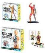 Set of 2 Build a Human Anatomy Body Skeleton Muscle Educational Study Model Kit