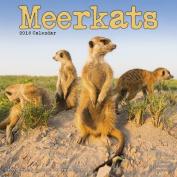 Meerkats Calendar 2016