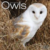 Owls Calendar 2016