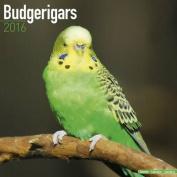 Budgerigars Calendar 2016
