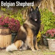 Belgian Shepherd Dog Calendar 2016