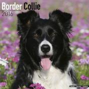 Border Collie Calendar 2016