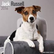 Jack Russell Calendar 2016