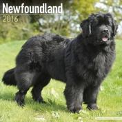 Newfoundland Calendar 2016