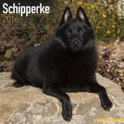 Schipperke Calendar 2016