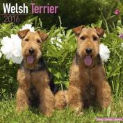 Welsh Terrier Calendar 2016
