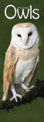 Owls Slim 2016