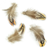 Touch of Nature Ringneck Pheasant Natural Feathers for Arts and Crafts, 3gm, Brown