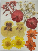 LoveDiyLife Red Flower White Sweet Alyssum with Branch and Mini Rose Yellow Daisy and Viola Real Pressed Dried Flowers